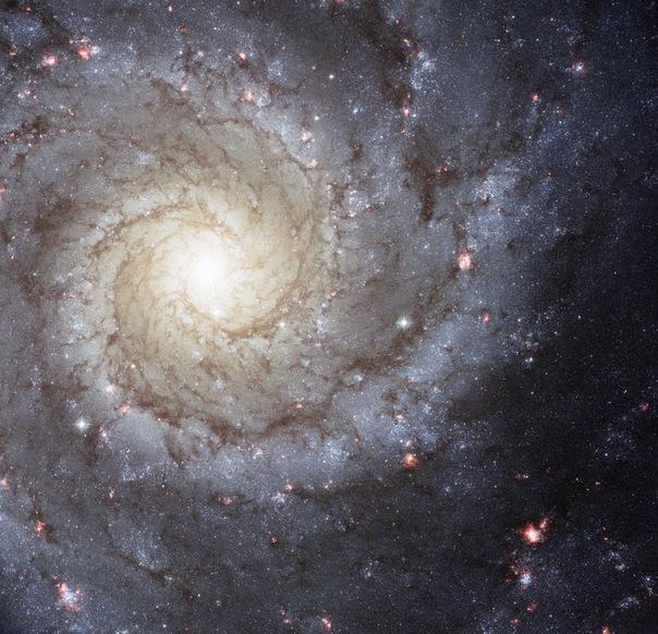 фотоснимки объектов каталога Месье - М74